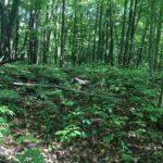 Lot 72 Birch View Trail